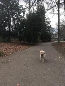 best dog walking spots in Geneva