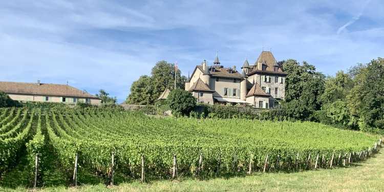 Wine Tasting in Geneva