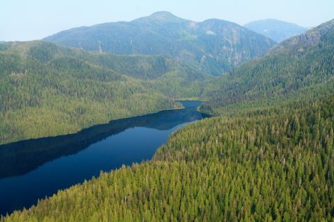Tongas National Forests