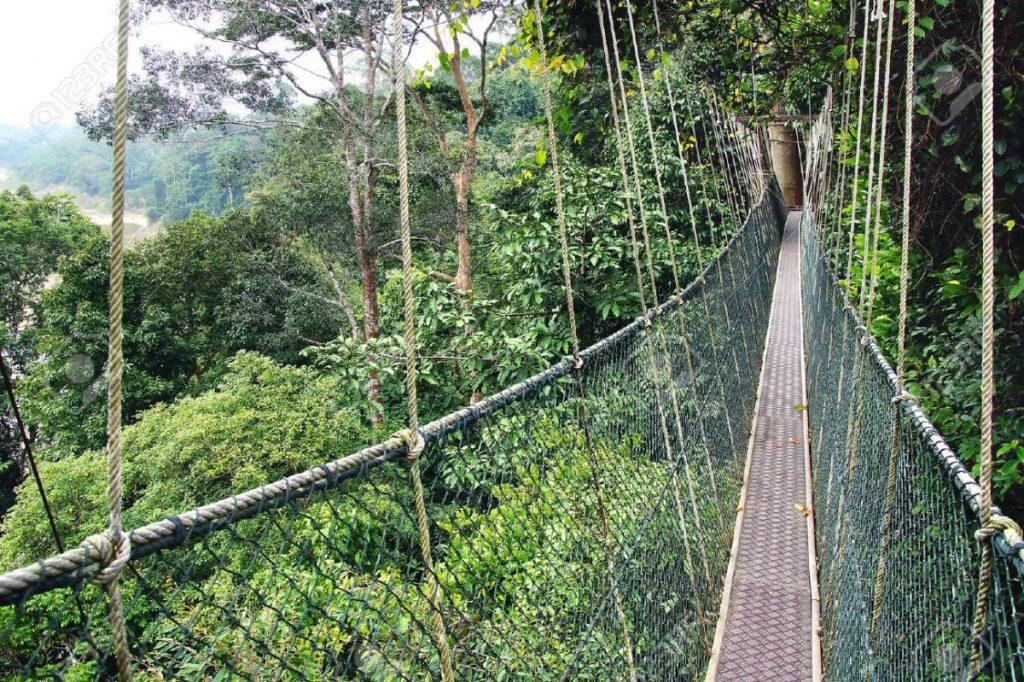 Taman Negara Forest