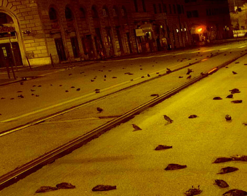Mass Death Of Birds On New Year's Eve In Rome
