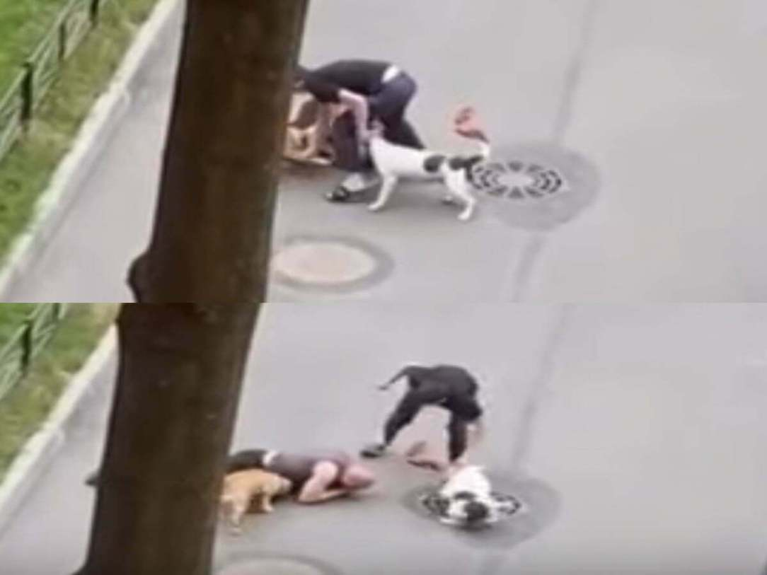 2 Dogs Attack A Russian Who Tried To Protect His Elderly Dog