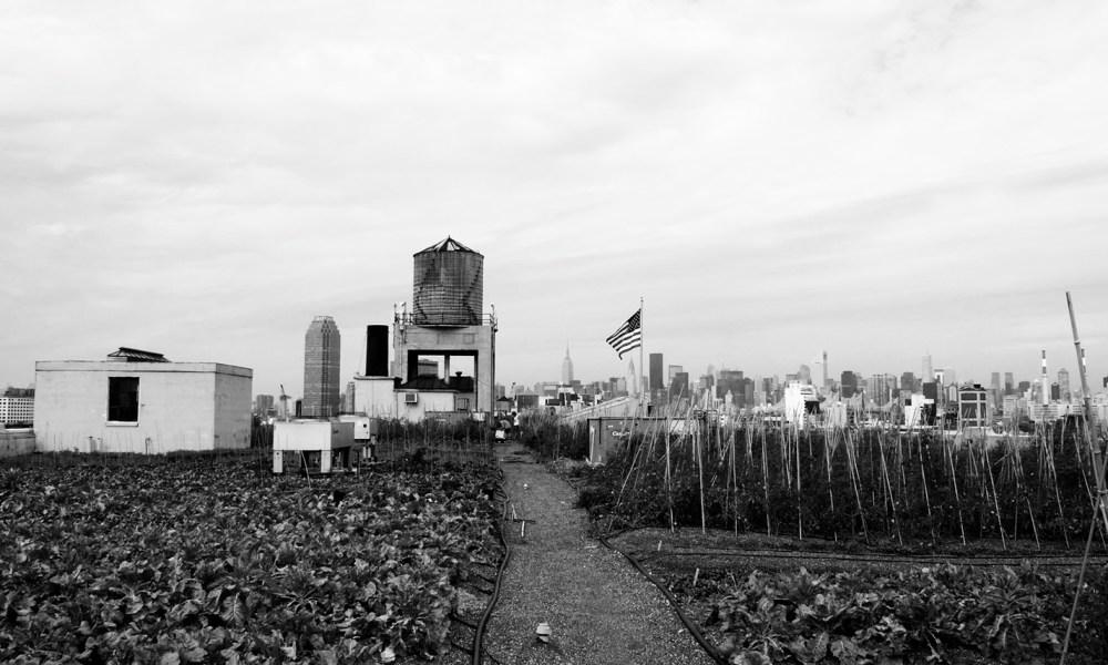 Urban Agriculture think iafor copy
