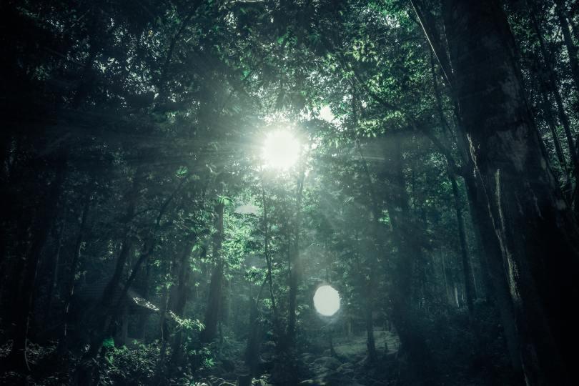 jungle-nature-88819