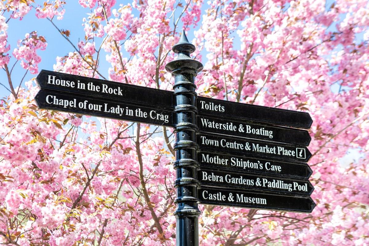 Blossom sign