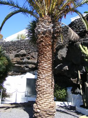 Cesar Manrique's Foundation - El Taro De Tahiche - Image 3