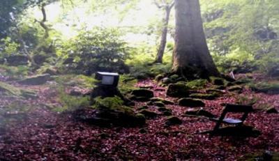 Avant Gardeners by Tim Richardson - Image 5