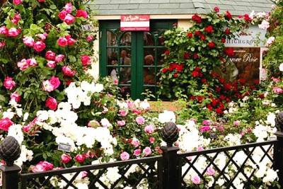Chelsea Flower Show 2009 - Image 19