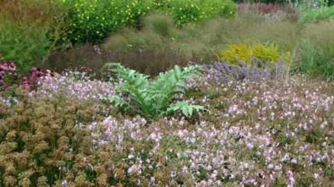 Sussex Prairie Garden copyright Darryl Moore