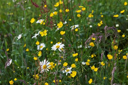 Meadow at Veddw - copyright Charles Hawes