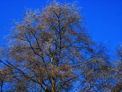 Winter, tree at Veddw, copyright Anne Wareham, South Wales Garden, Monmouthshire