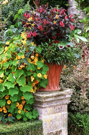 Powis urn copyright Charles Hawes, Veddw for thinkingardens
