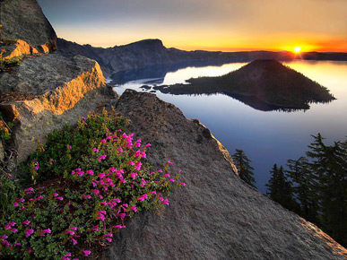 Dennis Frates  Penstemon sunrise  Crater Lake National Park, Oregon on thinkingardens