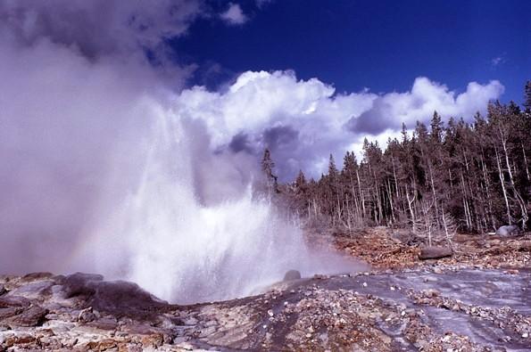 Geyser, Yellowstone copyright Catharine Howard