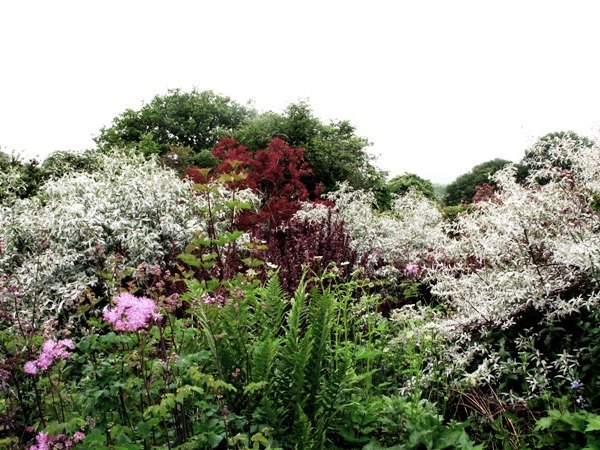 Shrubs Early June 2 017 grey and purple border