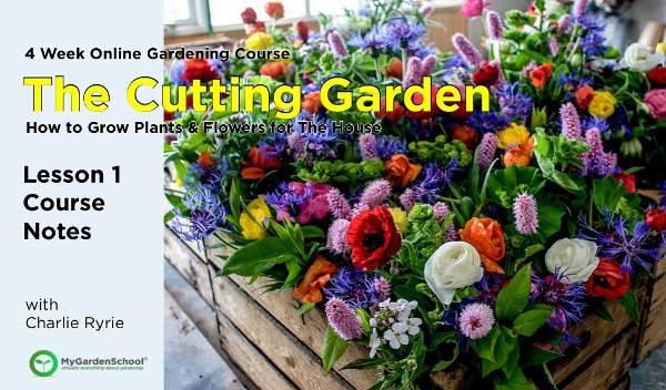 Cutting Garden 1