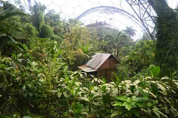 Eden Project copyright Noel Kingsbury DSC_0833