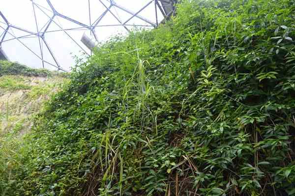 Eden Project copyright Noel Kingsbury DSC_0836