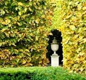 Niche George Carter Garden copyright Ann Hawkins.