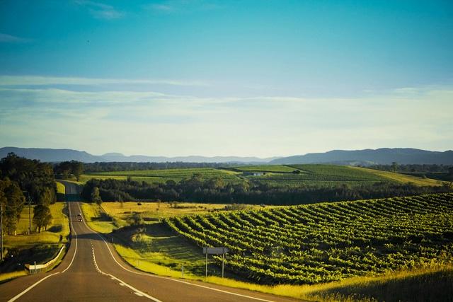 Vineyards - Australia