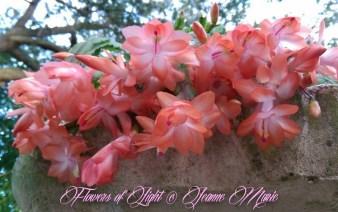 Flowers of Light~Jeanne Marie (16 of 28)