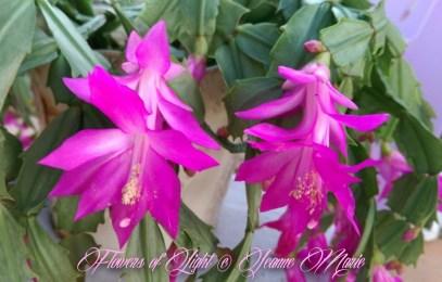 Flowers of Light~Jeanne Marie (18 of 28)
