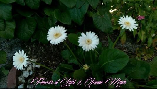 Flowers of Light~Jeanne Marie (2 of 28)