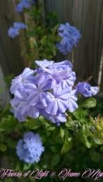 Flowers of Light~Jeanne Marie (21 of 28)
