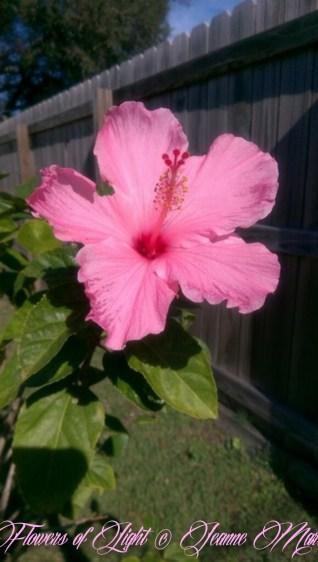 Flowers of Light~Jeanne Marie (23 of 28)