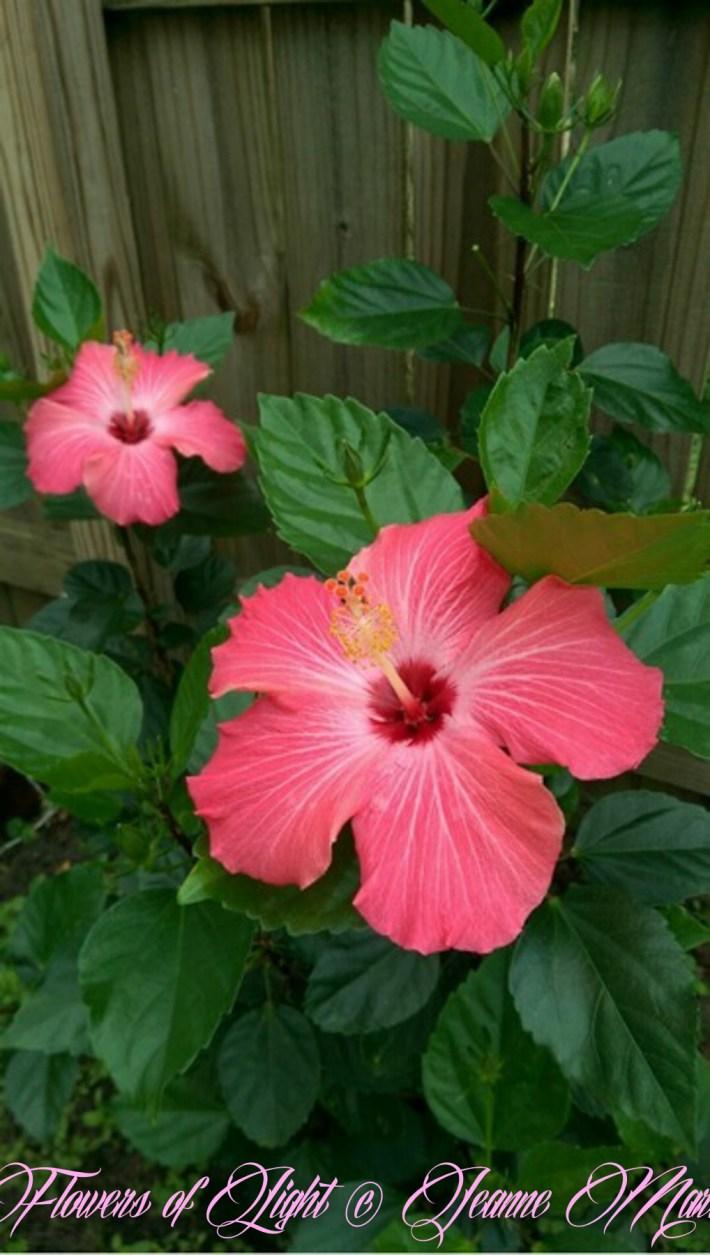 Flowers of Light~Jeanne Marie (28 of 28)