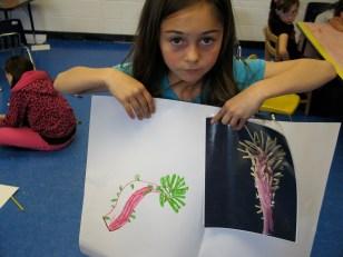 Seed Drawing 2