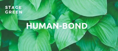 stage green humanbond spiral dynamics