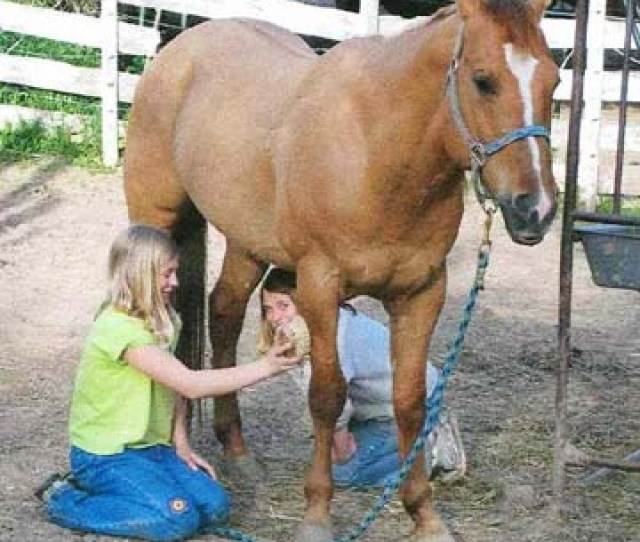 Crawling Under Your Horsethe More You Do With Your Horse The More Your Horse Will Do For You The More You Trust Your Horse The More Your Horse Will