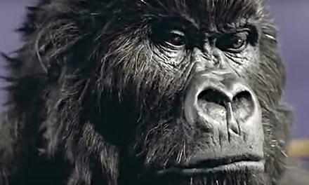 AdWatch: Cadbury | Gorilla