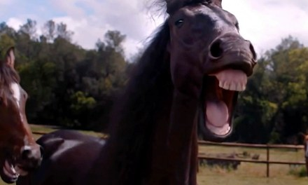 AdWatch: Volkswagen | Laughing Horses