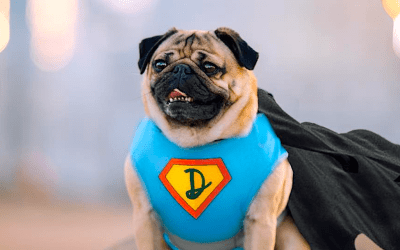 Doug the Pug: The Dog, the Myth, The Internet Legend