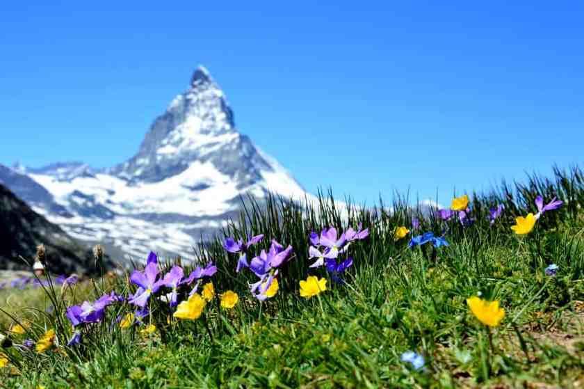 alpine beautiful bloom 267133_result