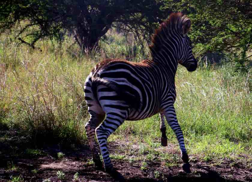 animal animal photography bush 787695_result