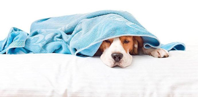 general symptoms of allergies will appeare