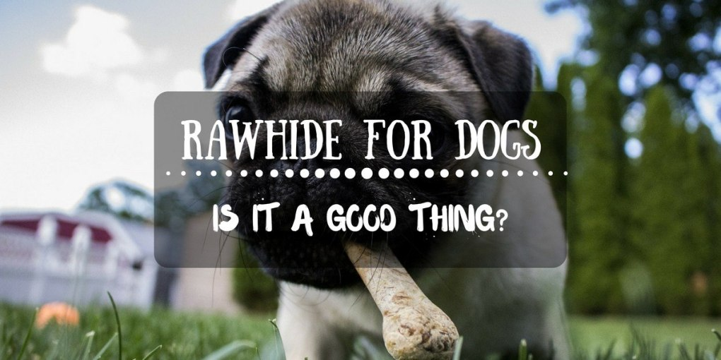 rawhide for dogs is good thing?
