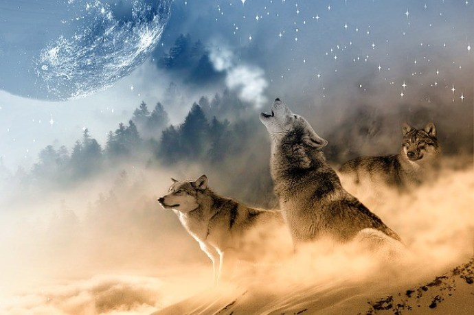 dogs and wolves are relative