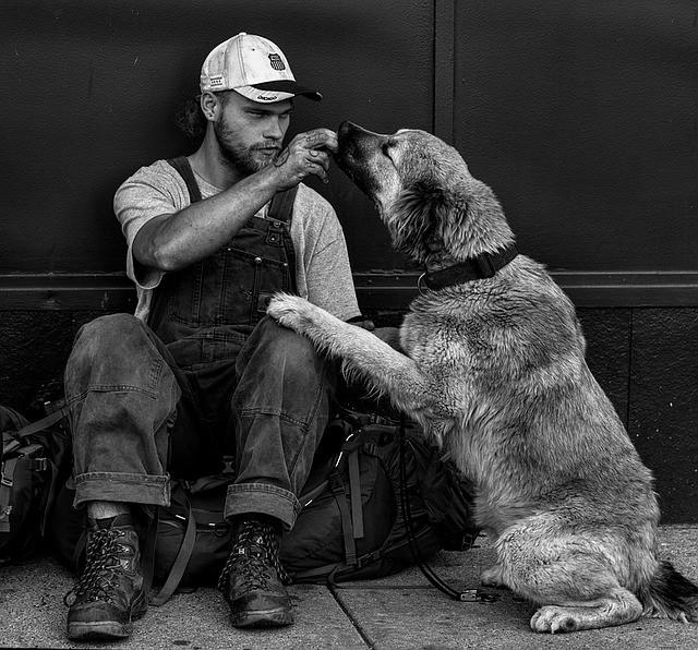 Reward Your Dog When He Is Quiet