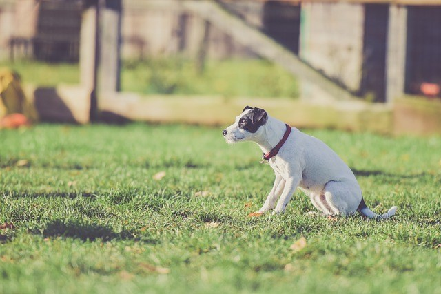 why do your dog need a bark collar?