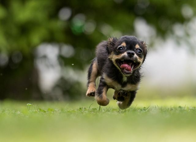 constipation in dogs is cause by vary reason