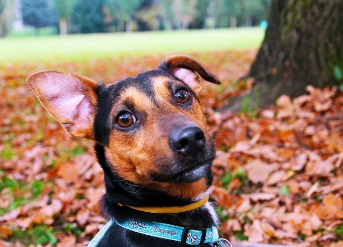 the important thing is proper use and choose best dog training collar for your dog