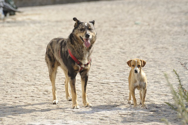 The size is extremely important to your dog's safety