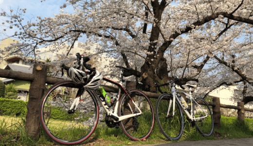 ロードバイクに乗って満開の桜を見てきた話と「検証の落とし穴」