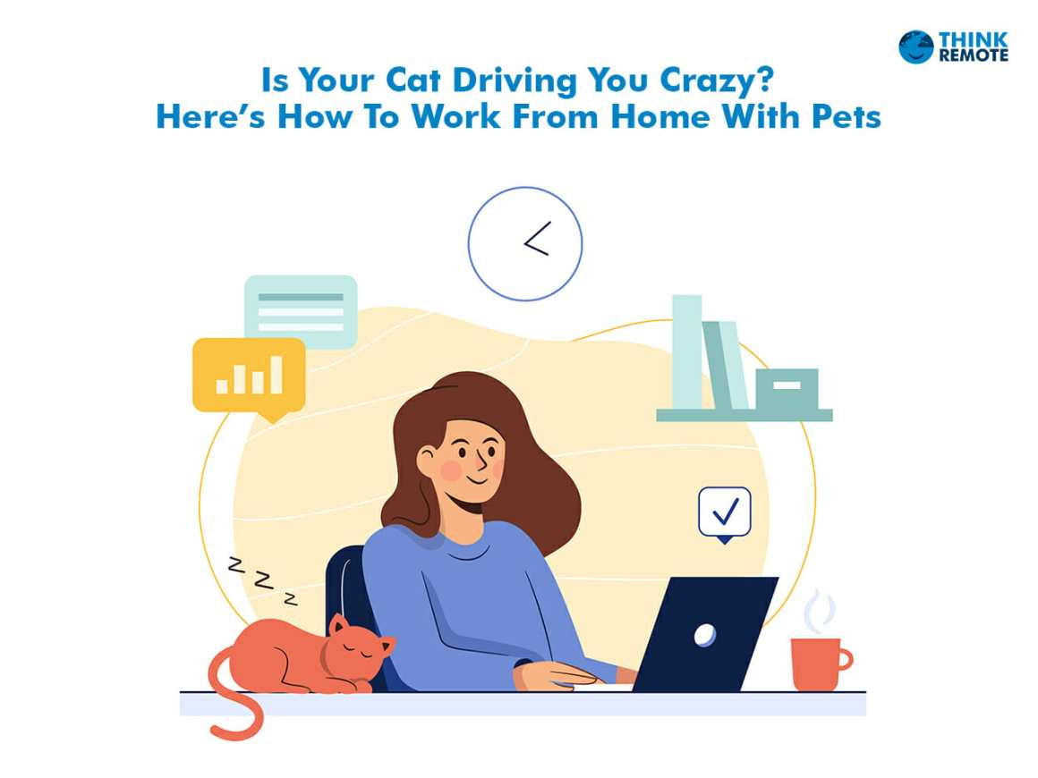 Work from home pets