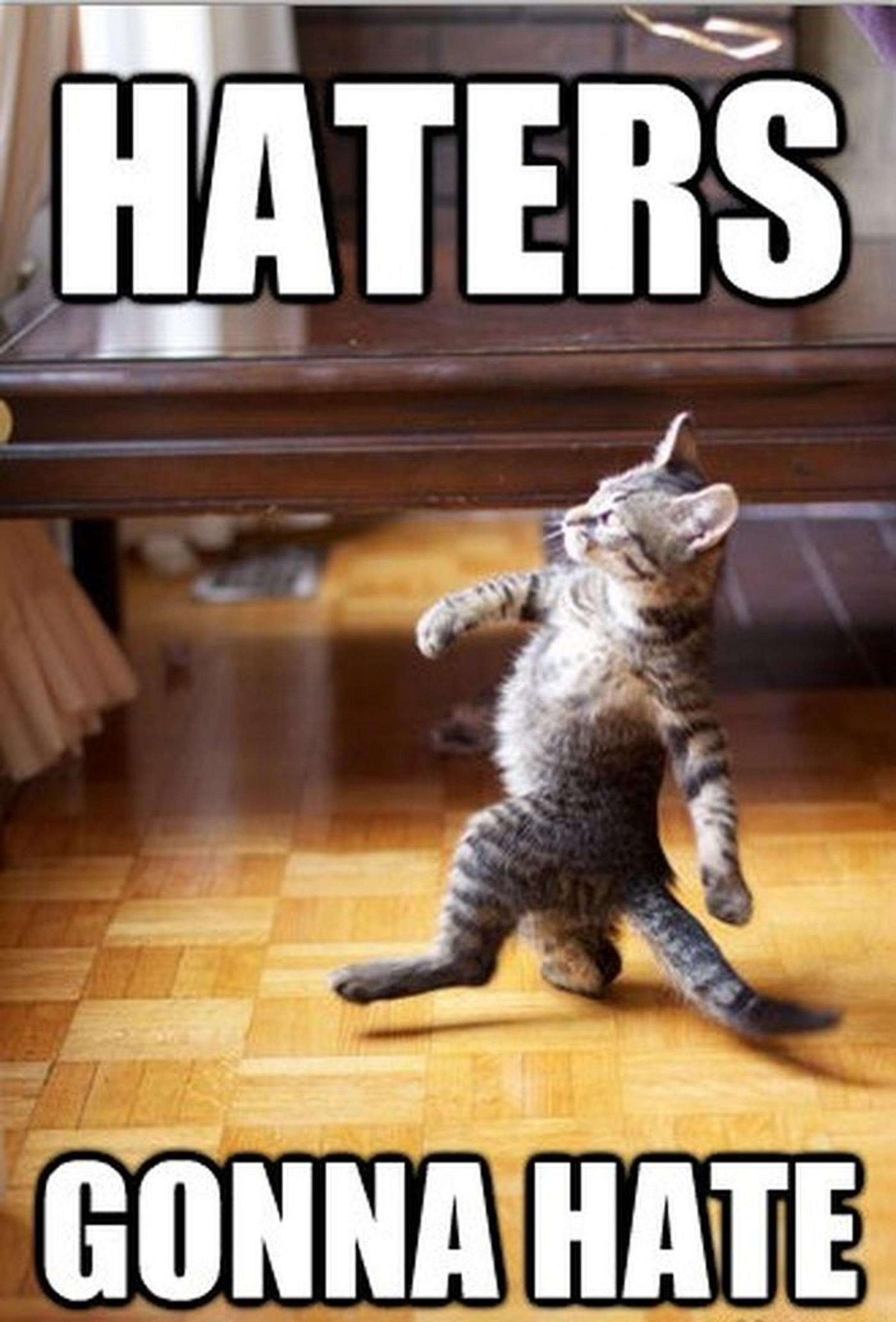funny-cat-haters-gonna-hate-4815.jpg