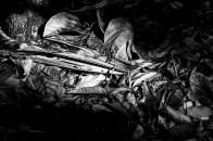 botanic garden, decay